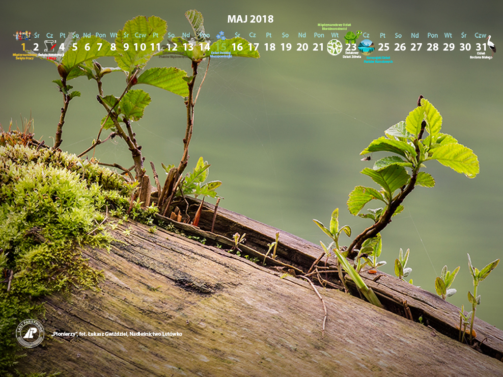Kalendarz maj 2018 1024x768.jpg