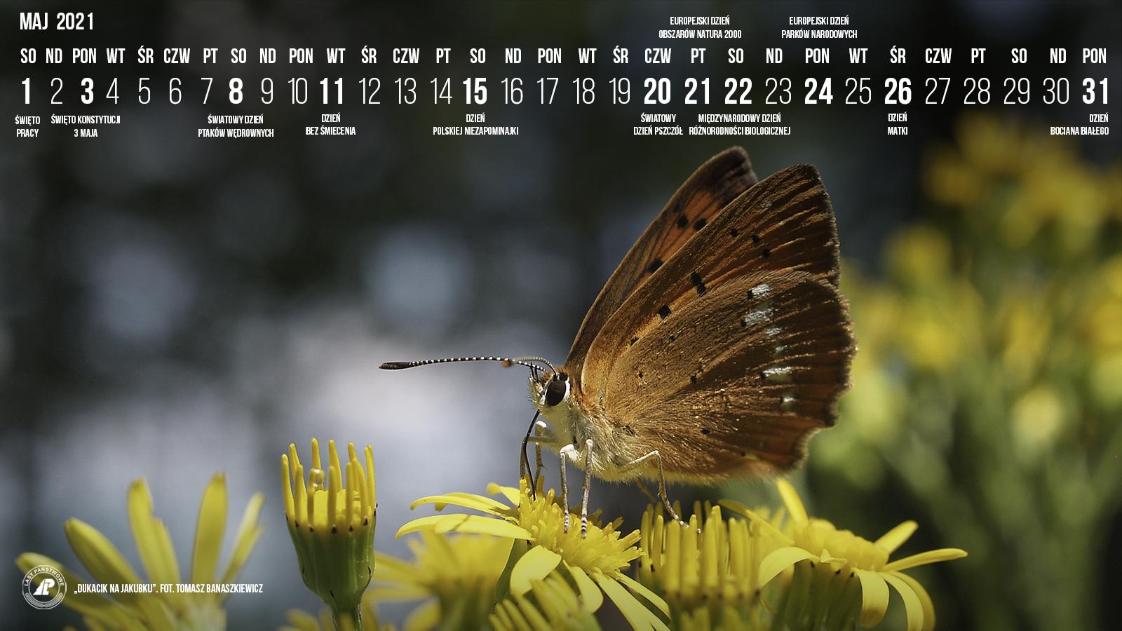 05-2021_1600x900[1].jpg