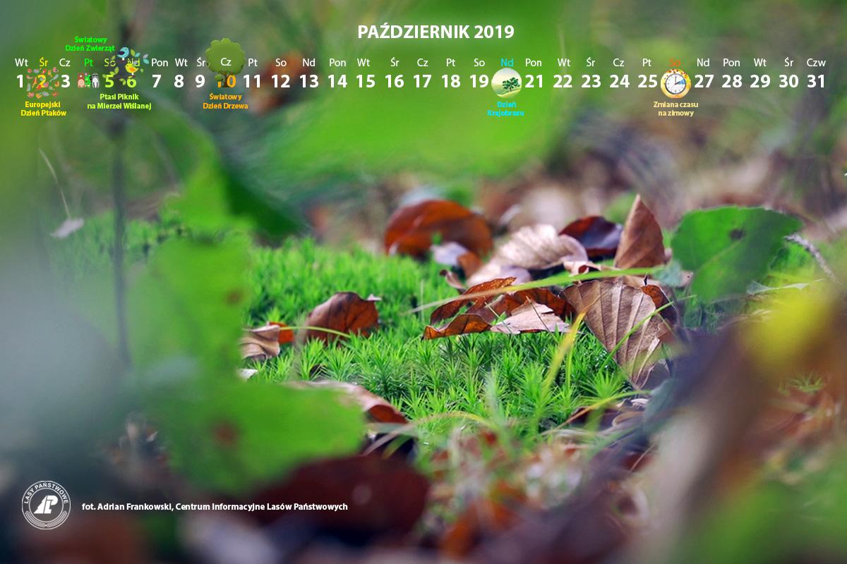 Kalendarz_październik_2019_1200x800[1].jpg