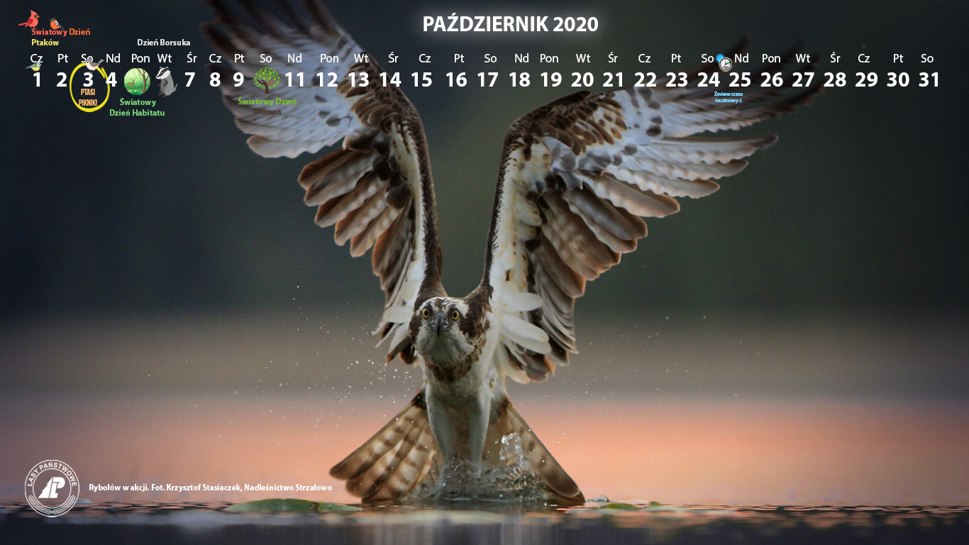 Kalendarz_1366X768_PAŹDZIERNIK_2020[2].jpg