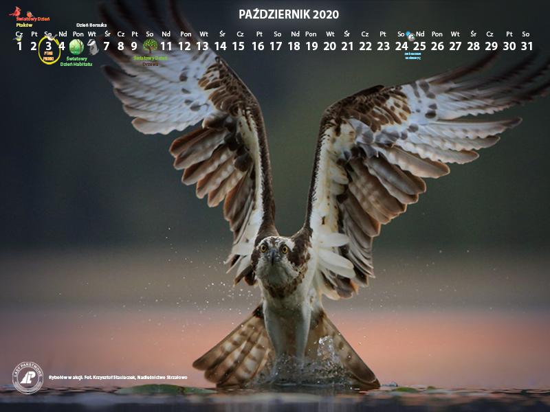 Kalendarz_800X600_PAŹDZIERNIK_2020[1].jpg