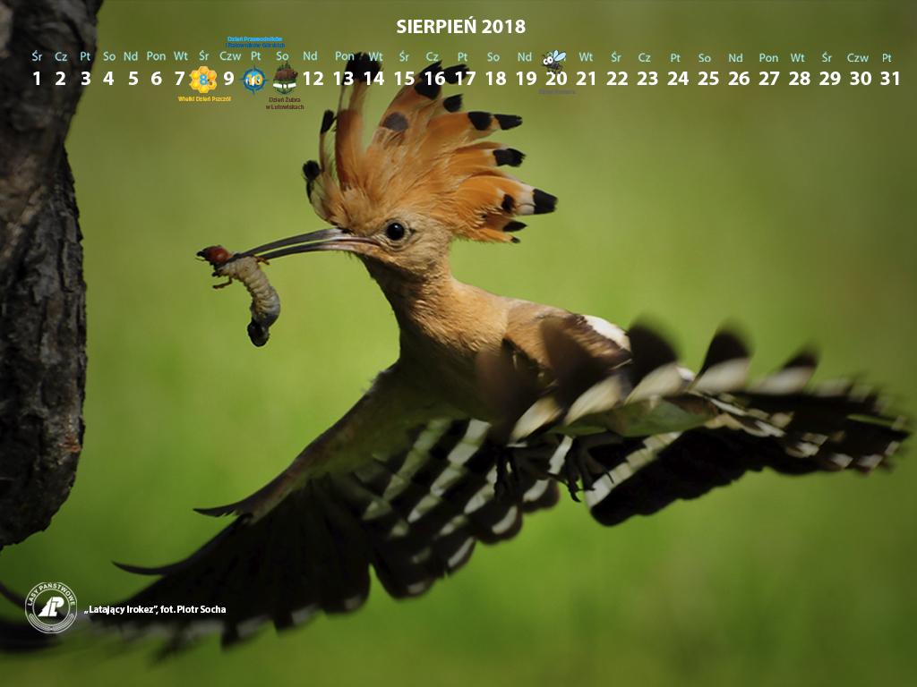 Kalendarz sierpień 2018 1024x768.jpg
