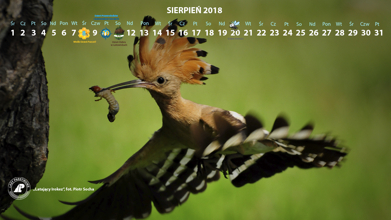 Kalendarz sierpień 2018 1366x768.jpg