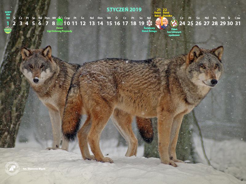 Kalendarz_styczeń_2019_800x600[1].jpg