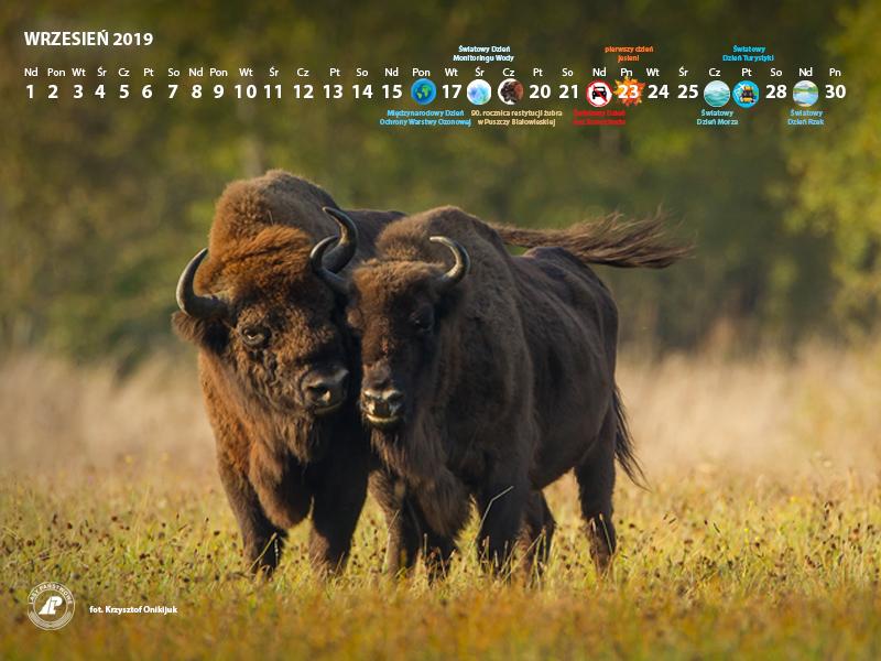 Kalendarz 09-2019 800x600.jpg