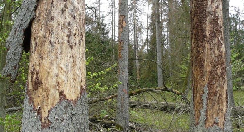Stanowisko ws. Puszczy Białowieskiej