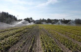Zintegrowana ochrona szkółek przed nowymi, inwazyjnymi patogenami w warunkach ograniczonego wyboru fungicydów