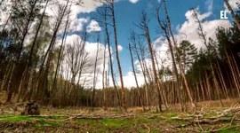 Leśny timelapse - Lasy w obiektywach leśników