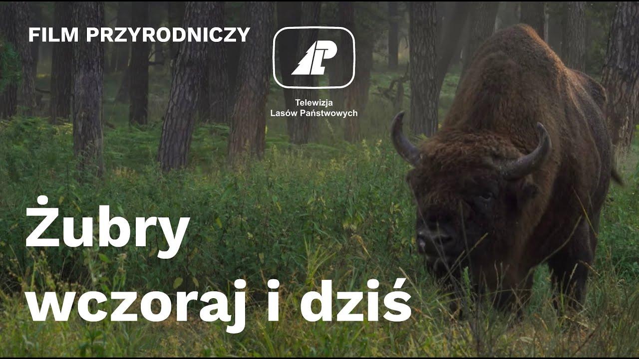 63cbe6aaf0e3a8 Puszcza Białowieska — Lasy Państwowe