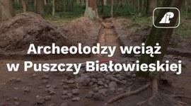 Archeolodzy wciąż w Puszczy Białowieskiej