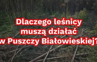 Dlaczego leśnicy muszą działać w Puszczy Białowieskiej?