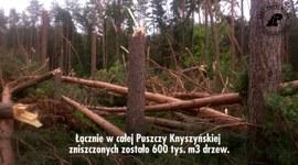 Huragan w Puszczy Knyszyńskiej