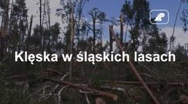 Klęska w śląskich lasach