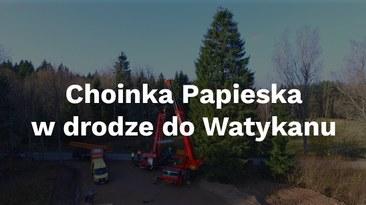 Polski świerk dla Watykanu
