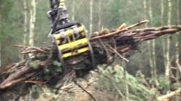 Prosto z lasu - zapowiedź (odc. 25/2017)