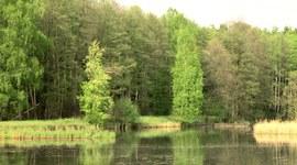 Prosto z lasu - zapowiedź (odc. 7/2015)