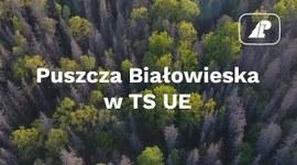 Puszcza Białowieska w TSUE