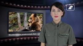 Wiadomości Lasów Państwowych #24